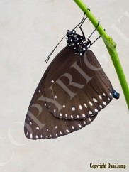 butterflies-portrait-16120201013_092905
