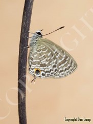 butterflies-portrait-16420201014_122434