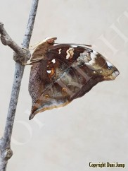 butterflies-portrait-18020201127_113302