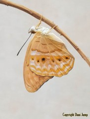 butterflies-portrait-19320201224_131307