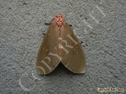 moths-0011DSCN0765