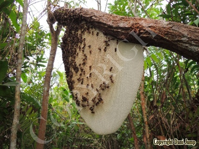 Bee Tours Rafter Beekeeping